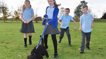 Hugo the Cockerpoo is the newest member of the class at Old Buckenham Primary School. Hugo is walked