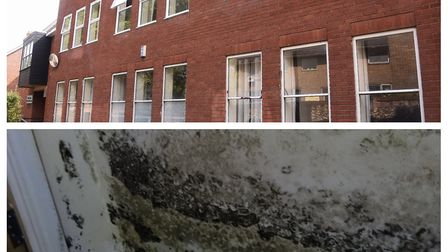 The mould inside the flats at St Faith's Lane, Norwich. Photo: Archant