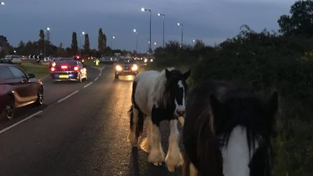 There horses which had been running free in the road dodged traffic before being lead to safety by p