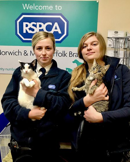 The two dumped kittens with officers from the RSPCA. Picture RSPCA.