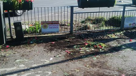 Blooms For Norwich flowerbeds were vandalised on Wednesday on Chapelfield Road. PHOTO: Emily Todd