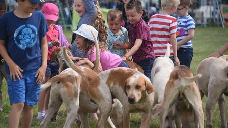 The hounds from the West Norfolk Hunt thrill the children at the Wayland Show. Picture: DENISE BRADL
