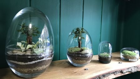 The Plant Den has opened on Upper Saint Gilles. PIcture: Ella Wilkinson
