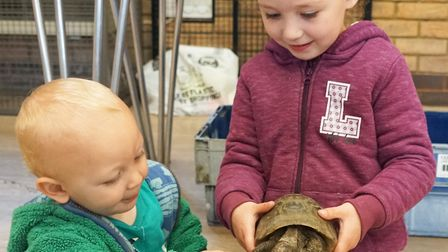 Tortoise Club is holding an event to promote rehoming and good care of tortoises. Timmy the tortoise