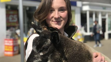 Kimberley Johnstone with her six week old pedrigree Blue Texel sheep named 'Sunday' at this years Sw
