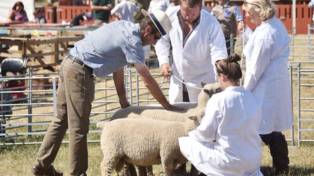 Wayland Agricultural Show, 2018.Picture: ANTONY KELLY