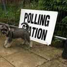 Wesley the Miniature Schnauzer outside a polling station in Norwich. Photo: Archant