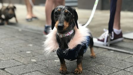 Ready to party with the pooches at the dachshund cafe at Revolution in Norwich. Picture: Neil Didsbu