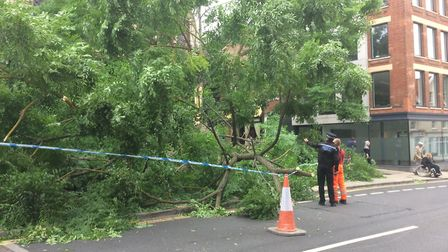 A tree has fallen down in the centre of Norwich blocking St Andrews Road. Picture: Staff