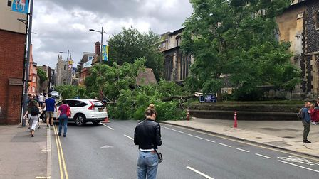 A tree has fallen in the windy weather on St Andrews Street near St Andrew's Church. Picture: Lindsa