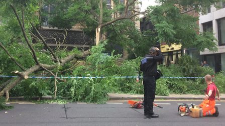 Emergency crews were called to more than 85 fallen trees and blocked roads after 50mph winds swept t