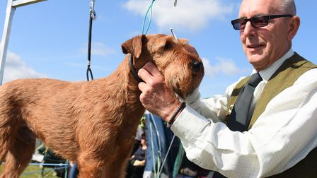 Ron Atkin grooms Genghis Khan the Irish terrier at the Old Buckenham dog show celebrating its 50th a