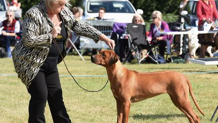 Beautiful poise in the ring of the Old Buckenham dog show celebrating its 50th anniversary. Picture: