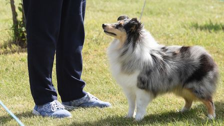 Showtime at the Old Buckenham dog show celebrating its 50th anniversary. Picture: DENISE BRADLEY