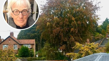 Geoffrey Weaver, who helped save the large beech tree on Paxton Place, Norwich, in 1998 from being f
