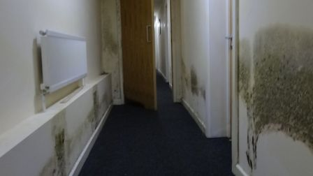 Mould in the corridor at 60 St Faith's Lane, Norwich. Photo: Archant