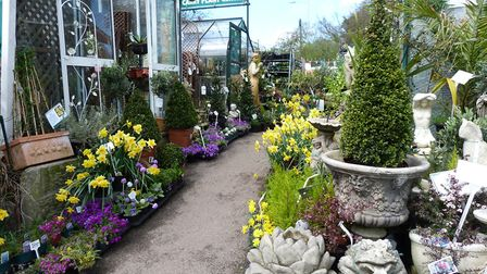 Mousehold Garden Centre, like others, have reported an increase in demand for gardening products. Pi