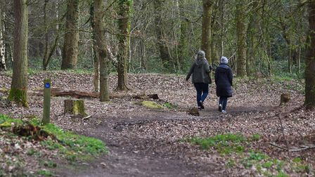 A group which works to protect Mousehold Heath in Norwich has reassured dog walkers its safe to walk