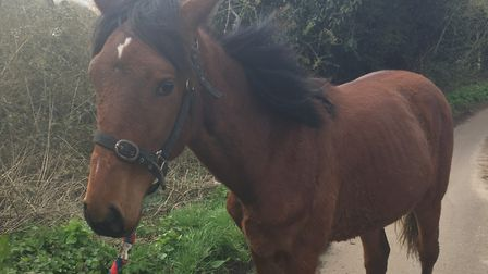 Norfolk Police are trying to find a stolen horse, taken from a field in Felthorpe. Picture: Norfolk
