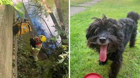 Peanut, a 14-year-old crossbreed, was rescued from river bank after jumping 25ft down to chase a sto