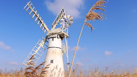 A lone reed isolated against the blue sky with Thurne Mill in the background.Picture: James Bass