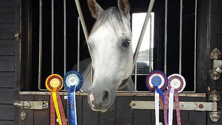 Carol Chapman's horse Prince poses with his rosettes