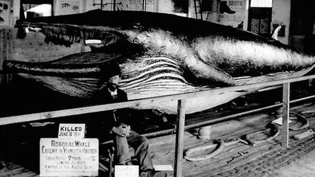 HAVING A WHALE OF A TIME...celebrated Great Yarmouth naturalist Arthur Patterson with the 30ft rorqu