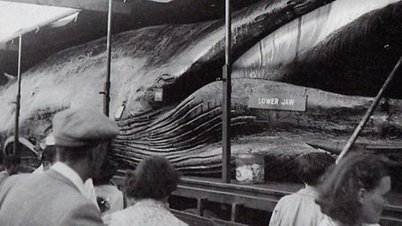 BIG ATTRACTION: a 65ft whale on exhibition briefly at Great Yarmouth Pleasure Beach in the late 1940