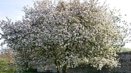 Full Bloom festival coming to an orchard near you.From pastel pink to pure white, the flowering of b