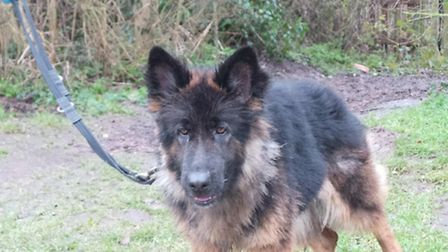 Can you give Sasha a new home? Picture: DOGS TRUST SNETTERTON