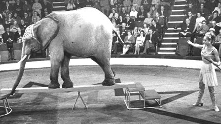 This elephant succeeded in reaching the Hippodrome Circus and is performing with trainer Mary Chippe
