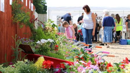 Brandon in Bloom's Blooming Barrows competition. Picture: Terry Hawkins