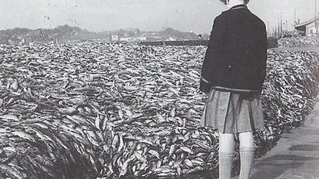 Nobody wants them: unsold herring on the quay, awaiting disposal. Picture: CLIFFORD TEMPLE