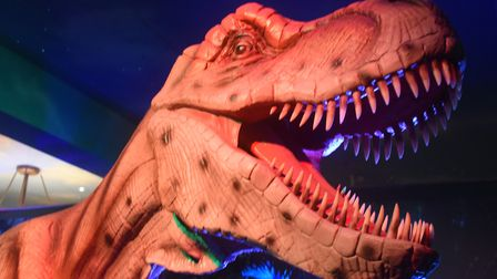 A T-rex at Jurassic Journey. Picture: DENISE BRADLEY