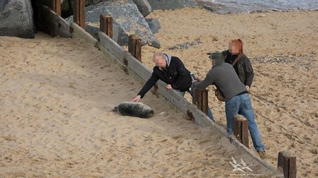 A man has been photographed posing for pictures while petting a seal pup in Horsey. Picture: Submitt