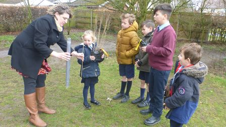 Children at Ludham Primary School and teaching assistant Emma Krug prepares to plant the trees.Pictu