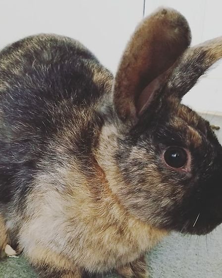 Faith Animal Rescue is looking for new homes for rabbits.