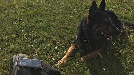 PD Harry chased the pair across fields near the Acle Straight. Picture: NS PoliceDogs