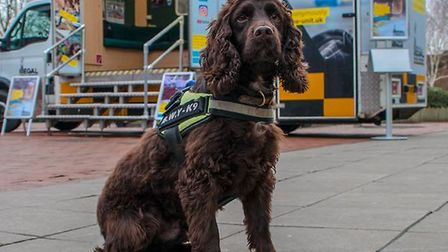 Yoyo the sniffer dog will be at the roadshowsPicture: Norfolk County Council