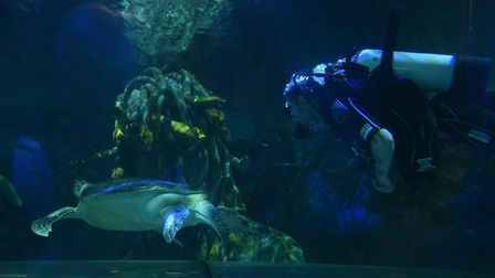 Noah the turtle is checked over by the Sea Life Centre divers after he was briefly taken out of the