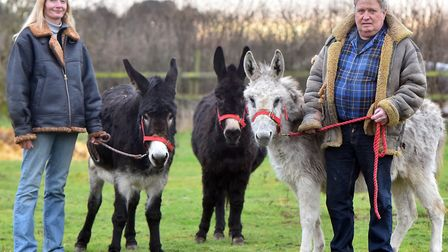 Trevor Austin and Kara Barbers three donkeys have been put on a strict post-Christmas diet after bei