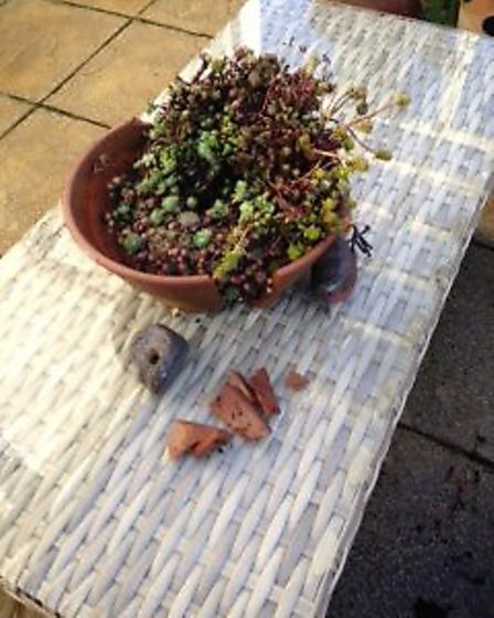 The drilling-work shook a terracotta flower pot from a table in the back garden and smashed it on th