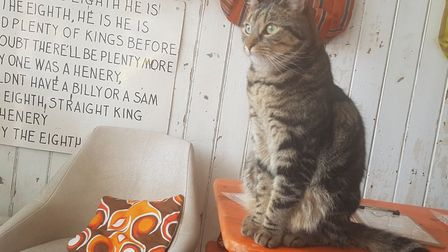 Teddy is enjoying meeting customers at Great Yarmouth's new cat cafe Darling Darlings Picture: Liz C