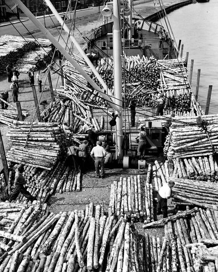 Dockers unloading 940 tons of silver birch from Sweden on to Southtown's Bollard Quay in 1957, to be