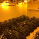 Police found £40,000 worth of cannabis following a raid at 39 Nelson Road North in Great Yarmouth. P