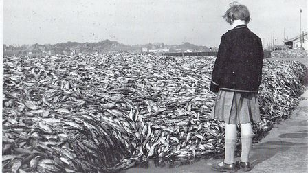 A glut in the catch meant many crans of fresh fish being unsold and are pictured here in 1954, await