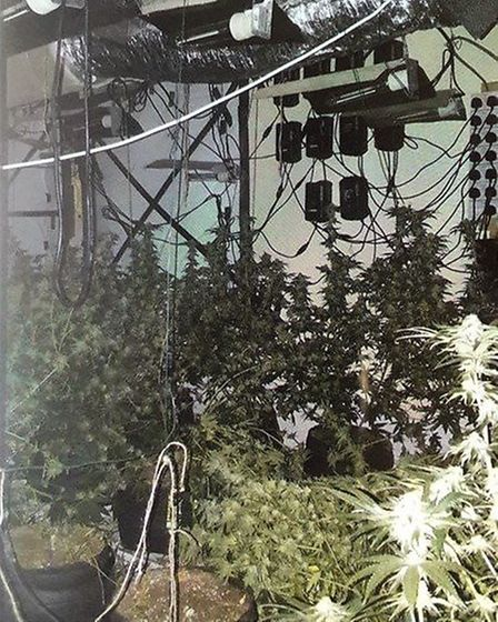 More than 300 cannabis plants have been seized from an abandoned premises in Great Yarmouth. Picture