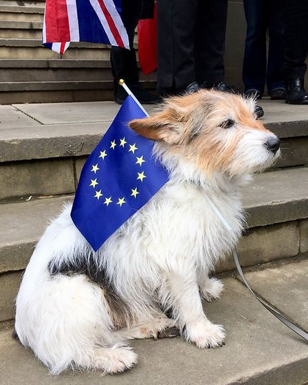 Great Northern March against Brexit in Leeds. Photograph: Jennifer.