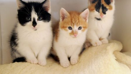 Hundreds of cats have been reported missing
