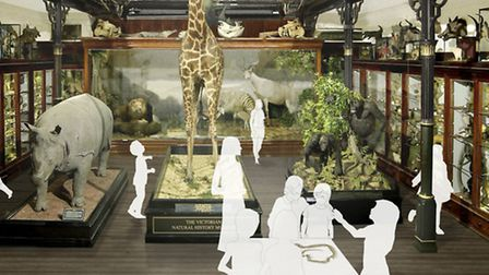 An artist's impression of the new-look natural history gallery at Ipswich museum.